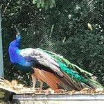 Foto van Woodland Park Zoo