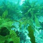 Φωτογραφία: Dive Centre Manly