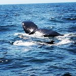 Brier Island Whale and Seabird Cruises Photo