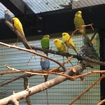 Bird area