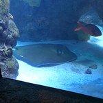 Foto de Downtown Aquarium