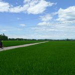 our guide leading the way across the paddy fields