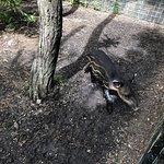 Foto de The Belize Zoo