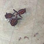 Foto di Gili Meno Turtle Sanctuary