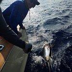 Humdinger Sportfishing의 사진