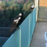 Balcony regulars