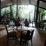 dining area looking toward rainforest