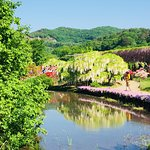 Ashikaga Flower Park照片