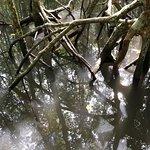 Foto de Kilim Karst Geoforest Park