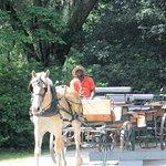 Middleton plantation horse drawn carriage tour