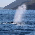 Billede af Albany Ocean Adventures