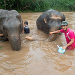 Guides helping wash the elephants