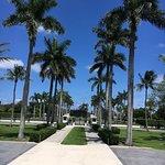 Tall palms line the driveway