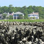 Oyster Beds seen from our Boat