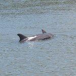 Dolphin on Island Adventure Vanishing Island Tour