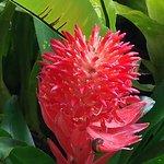 Foto di Sarawak Orchid Garden