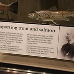 Importing trout and salmon