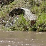 Mara River resmi