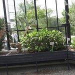 Foto de Old Botanical Garden