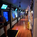 Photo de Key West Aquarium
