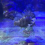 Lion Fish are an invasive species