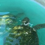 Don't miss the sea turtles outside on your way to the Hamilton bus station