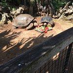 Galápagos tortoiss smell!