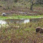 Photo of Parque Nacional Mburucuya
