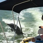 Dolphins jumping @ Dreamlander Tours-Goodland, Marco Island