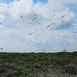 Foto de Arquipélago das Berlengas
