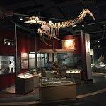 The Rooms: Natural History Display