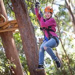 Coffs Treetops at Sealy Lookout - another great way to enjoy the view!