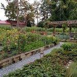 Fresh garden source