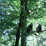 Bild från Oregon Zoo