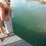 Foto de Island Fish Company