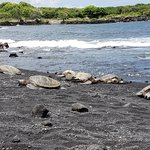 Six sea turtles eventually made their way onto the black sand beach to rest.