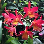Foto de Phipps Conservatory and Botanical Gardens