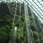 Foto de Cloud Forest