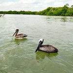 Foto de Río Lagartos Adventures