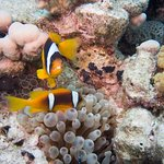 Foto de Ilios Dive Club