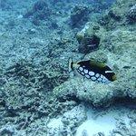 Φωτογραφία: Similan Islands
