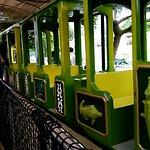 Croco train