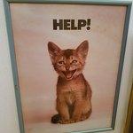 Foto van Cat Museum