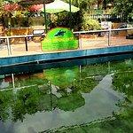 Kolam cat fish