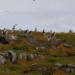 Plenty puffins greeted us on the island!