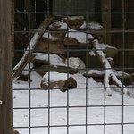 Foto Utica Zoo