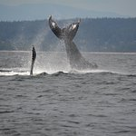 Billede af Campbell River Whale Watching and Adventure Tours
