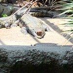 Photo of Zoo Basel