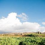 오아후 포토그래피 투어즈의 사진
