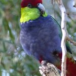 ภาพถ่ายของ Bunbury Wildlife Park